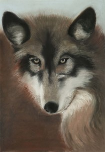 5-vlk
