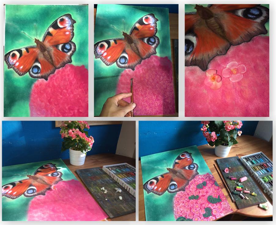 motýl kytka