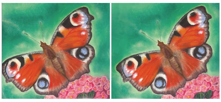 motýl celý