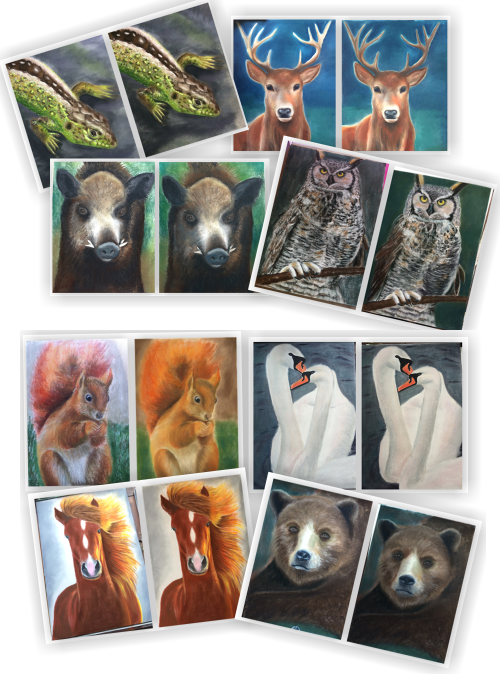 zvířata 9 rozdílů